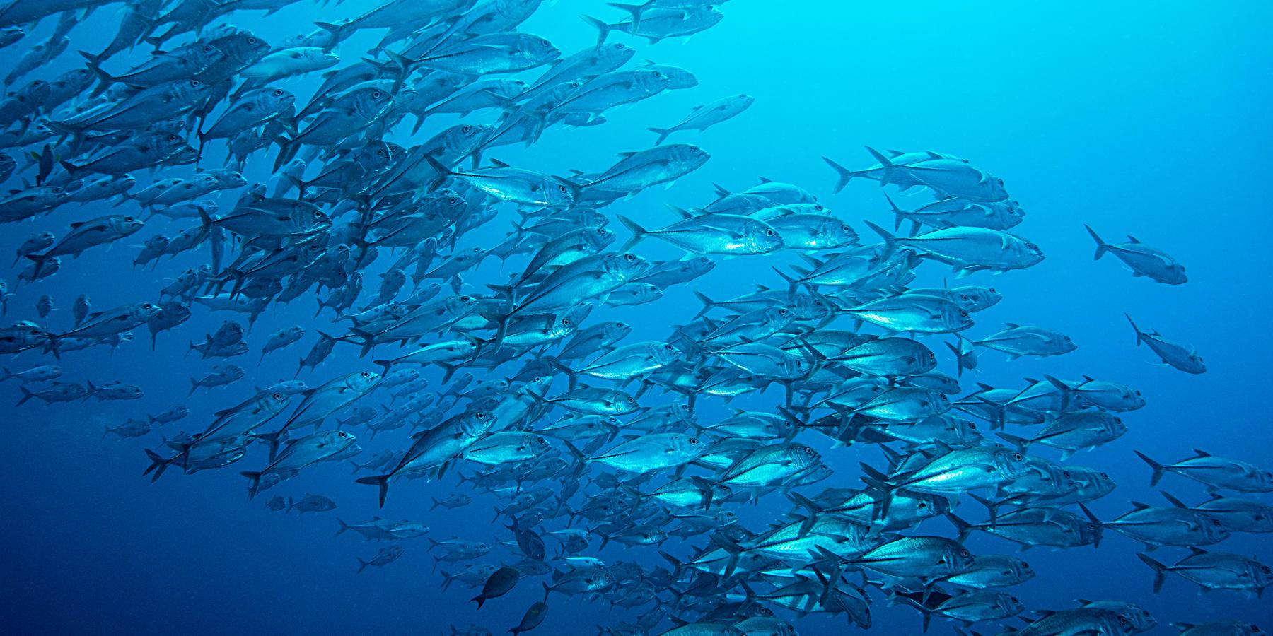 carangues - Surpêche : Daniel Pauly tire le signal d'alarme