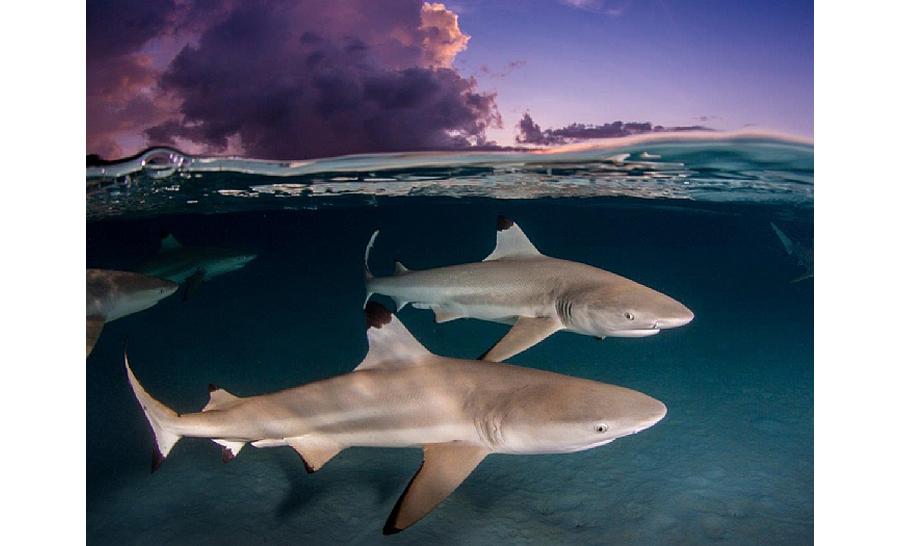 2è prix requins : Renee Capozzola des Etats-Unis © Renee Capozzola