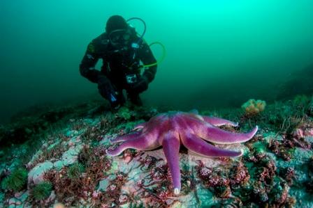 Plongée à Saint-Pierre et Miquelon © Erwan Amice