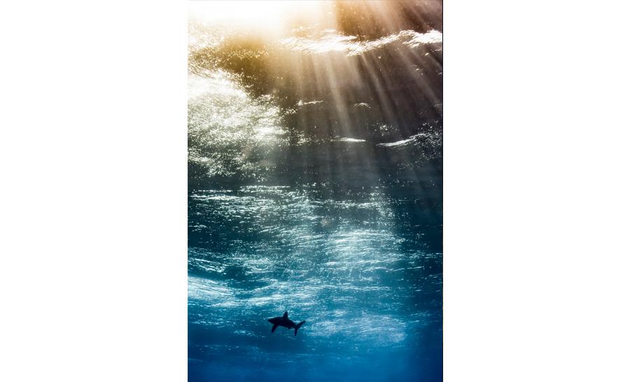 meilleur espoir de l'année 2017 : Horacio Martinez d'Argentine avec 'Oceanic in the sky' © Horacio Martinez/UPY 2017