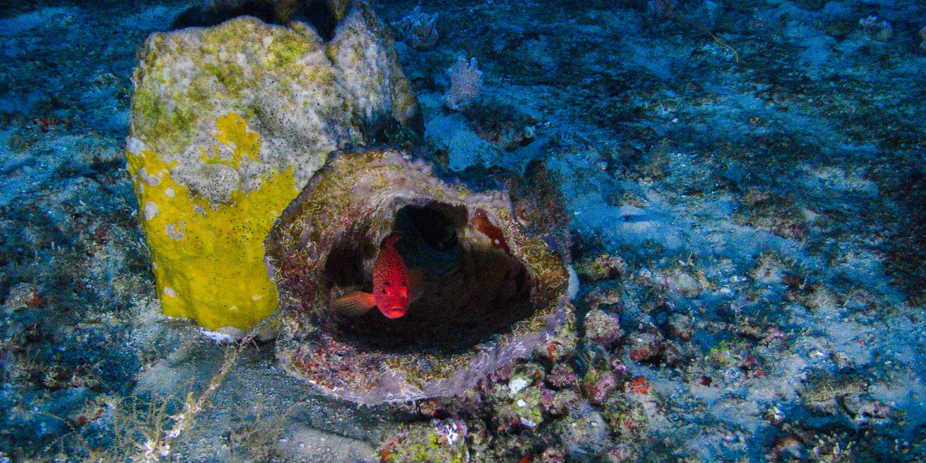 recif corallien amazone copyright greenpeace - Un mystérieux récif corallien découvert au large de l'Amazone !