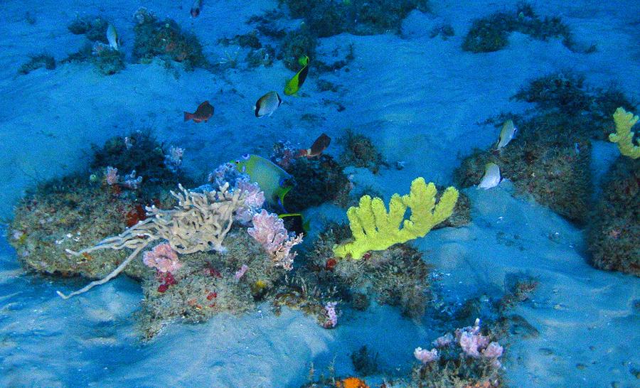 échantillon d'espèces du récif corallien de l'Amazone © Greenpeace