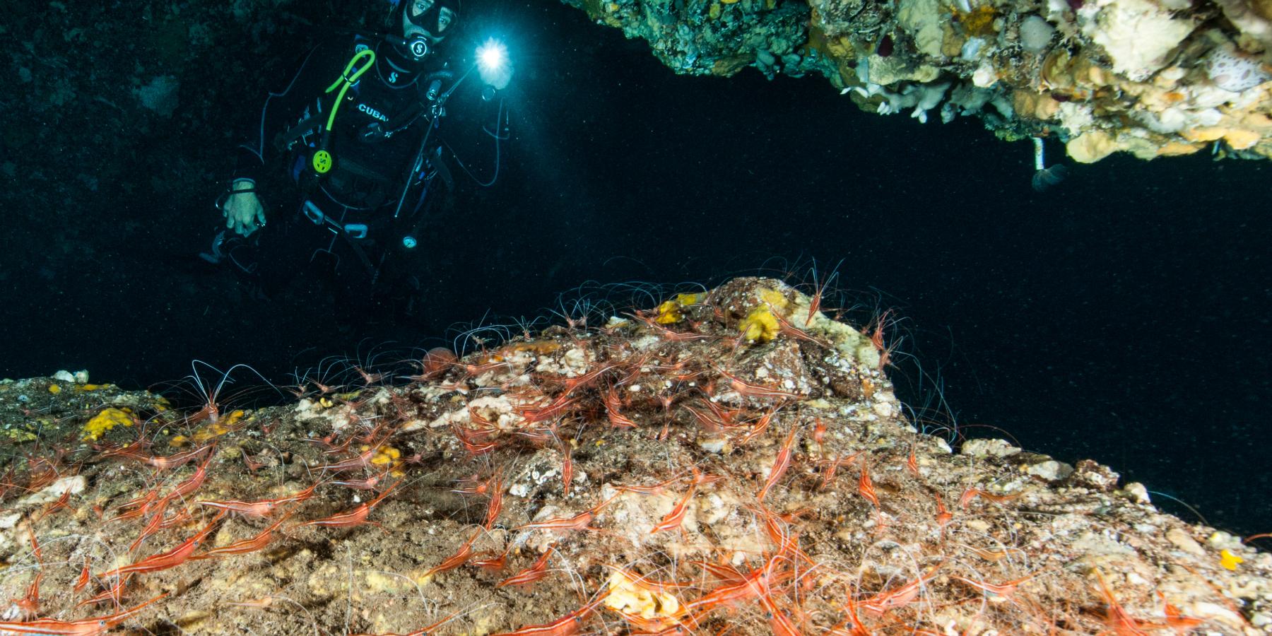 HEI 2385 HD ©Profondu Blue Ustica - Ustica, perle noire de la Méditerranée