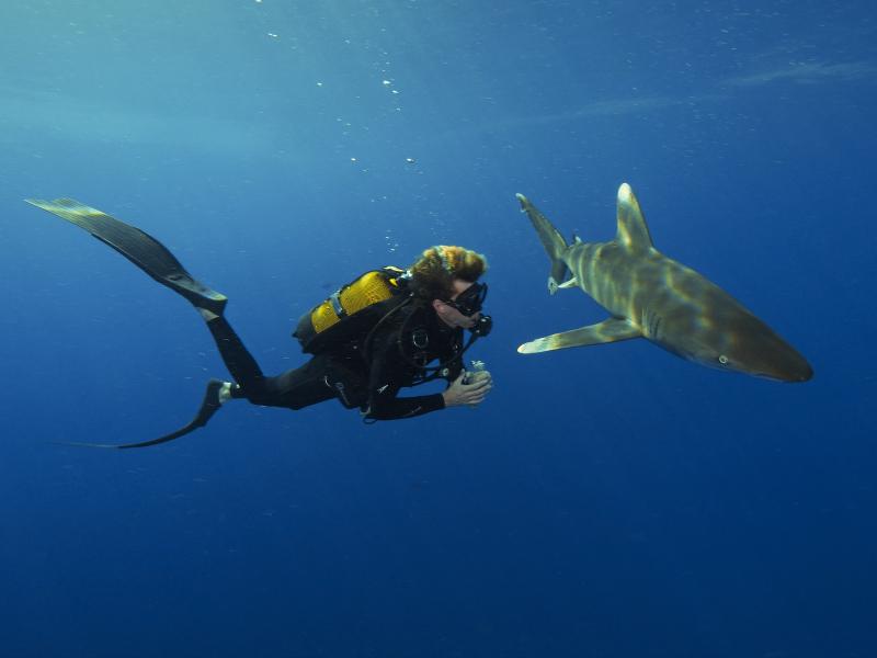 Steven Surina plonge en Egypt aux côté d'un Longimanus ©F.Boissier