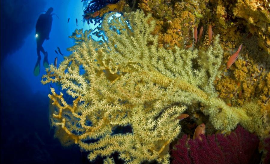La vie colorée dans les fonds de l'île d'Ustica ©Profondo Blu