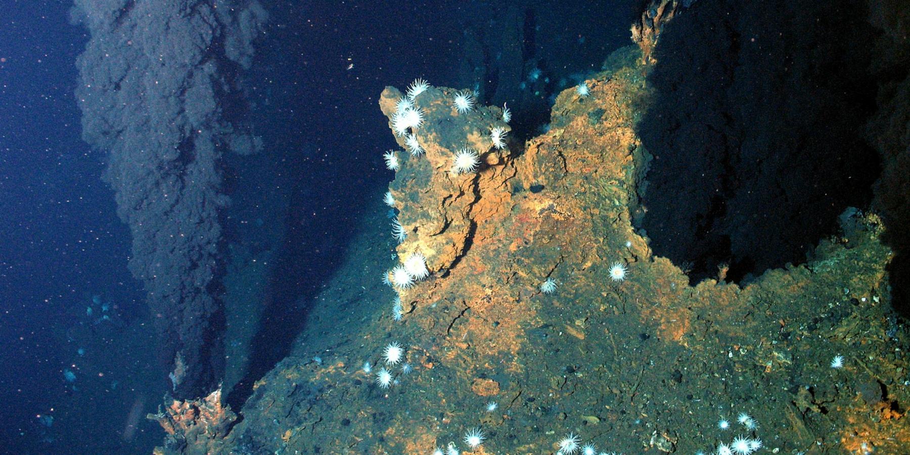 source2HDCOUVERTURE - Deep Sea Spy : aider la science en jouant les espions