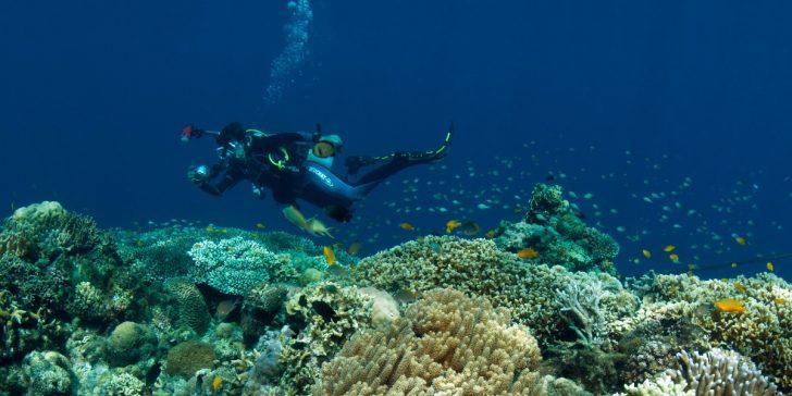 Photo OUVERTURE Dolphin House Reef Moalboal Patrick LOUISYmd 728x364 - 2013 – 2017 : des plongeurs engagés pour la science aux Philippines