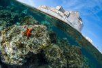 Amateur Patrimoine marin 1 Olivier RAZZANO 150x100 - Un beau palmarès photo pour le festival Galathea 2017