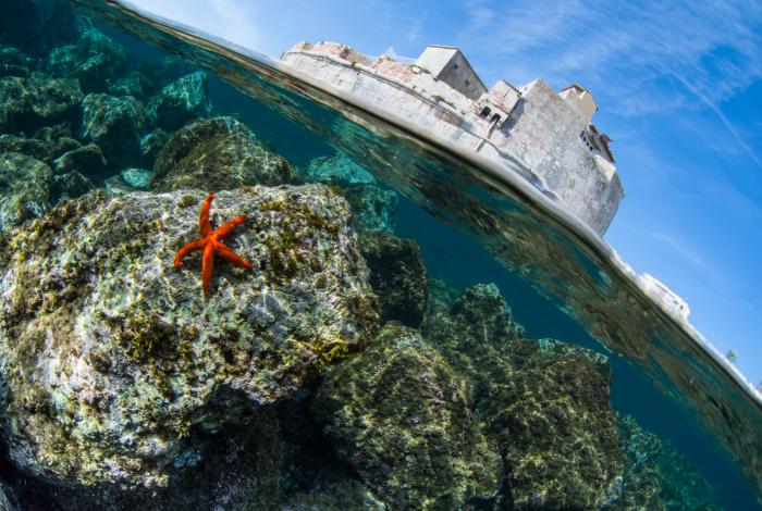 Amateur Patrimoine marin 1 Olivier RAZZANO - Un beau palmarès photo pour le festival Galathea 2017