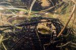 Amateur S├®rie1b Claudia Webert Gebert 150x100 - Un beau palmarès photo pour le festival Galathea 2017