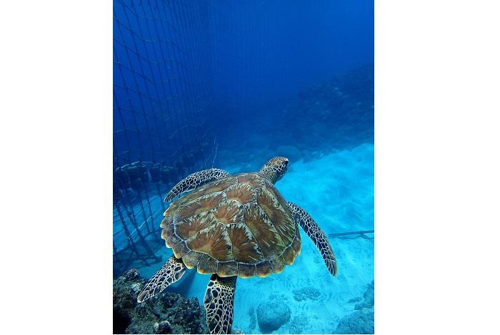 Debutant  patrimoine marin 1  Miguel RAMIREZ - Un beau palmarès photo pour le festival Galathea 2017