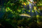 Expert ambiance3  Filip STAES 150x100 - Un beau palmarès photo pour le festival Galathea 2017