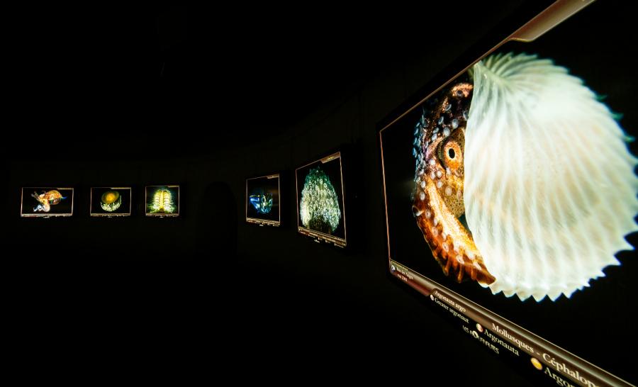 Une partie de l'exposition se déroule dans le noir pour simuler une plongée de nuit © ville Antibes