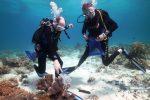Récif de Tubbataha : joyau isolé sous haute protection