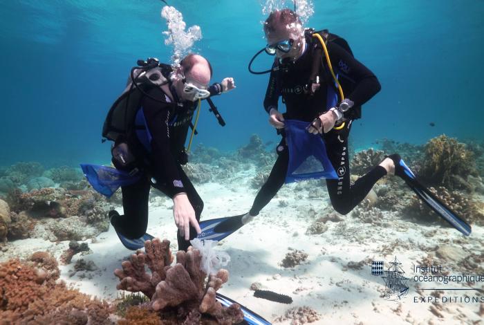 S.A.S. le Prince Albert II de Monaco et Robart Calcagno, directeur général de l'institut océanographique de Monaco, enlèvent les déchets présents dans l'eau mais aussi sur les plages à Tubbataha, Philippines. ©Institut océanographique de Monaco
