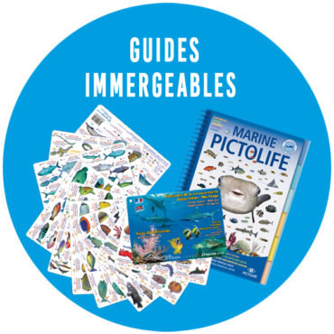 Guides immergeables