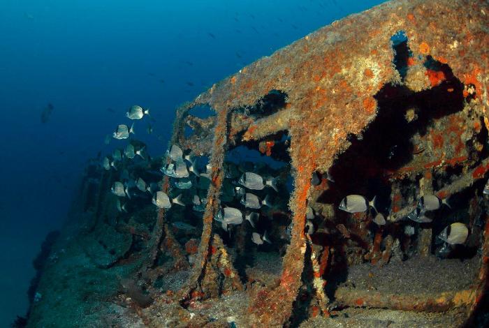De nombreux bancs de poissons ont investi le Rubis ©Nicolas Barraqué