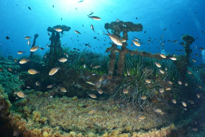 Les reste du Tell sont fréquentés de nombreux bancs de poissons. © Nicolas Barraqué
