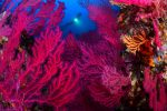 Championnat de France de photo sous-marine 2017 : les résultats
