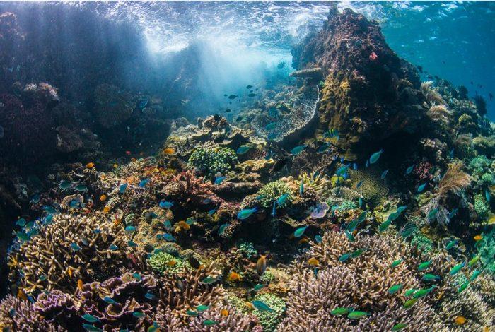 Les écosystèmes sous-marins en Indonésie sont riches de coraux et d'une faune dense qu'il faut protéger ©Coral Guardian