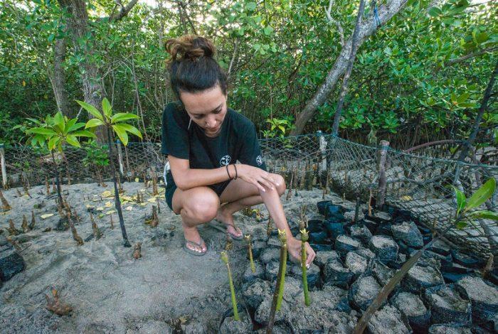 Lors de la mission Nusa Penida, les volontaires participent à la plantation de palétuviers dans la mangrove © Coral Guardian