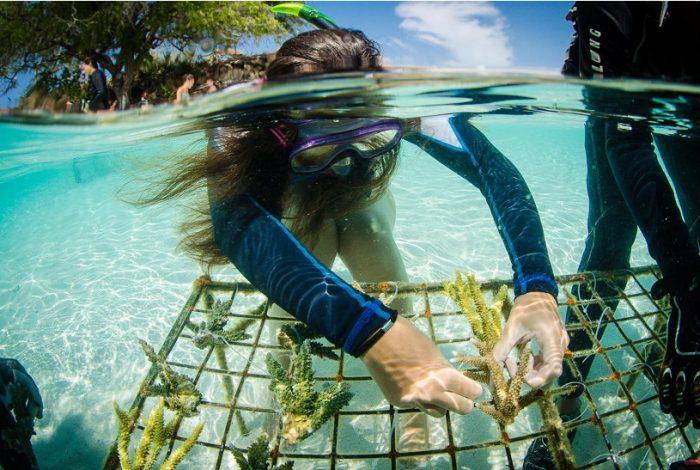 Les volontaire de la mission Komodo restaure les récifs en procédant à des transplantation de coraux à de faibles profondeurs ©Coral Guardian