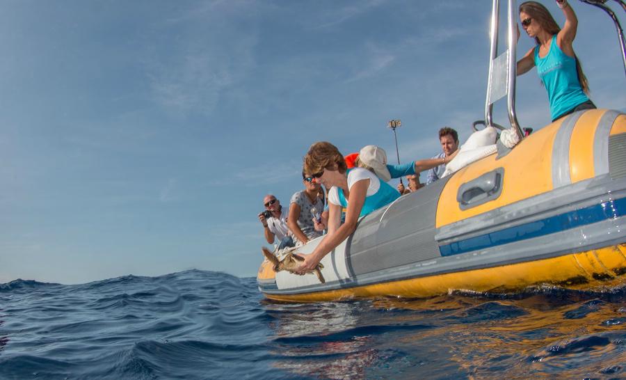 Le moment tant attendu pour cette petite tortue qui retrouve les eaux de la Méditerranée. ©Stéphane Jamme