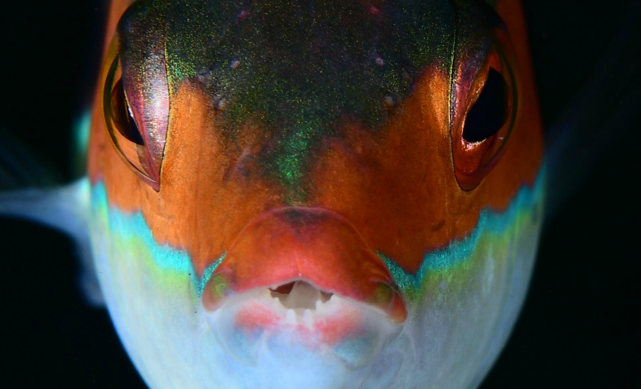 prix poisson macro ©Sebastien AMEEUW et Delphine FRAYSSE