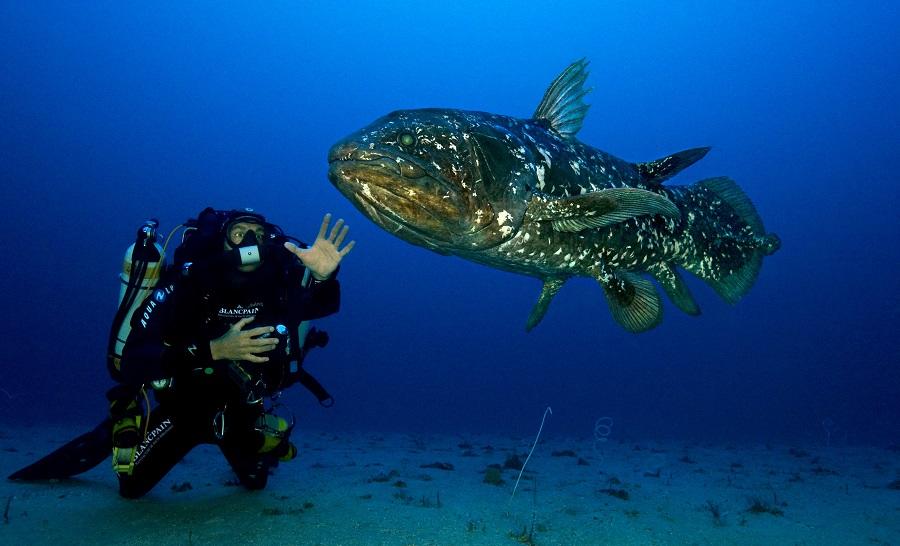 Extrait de Coelacanth, plongee vers nos originies. © Laurent Ballesta