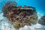 Grand Jeu des Abonnés : abonnez-vous à Plongez !, et gagnez un séjour à Palau avec Nature Plongée