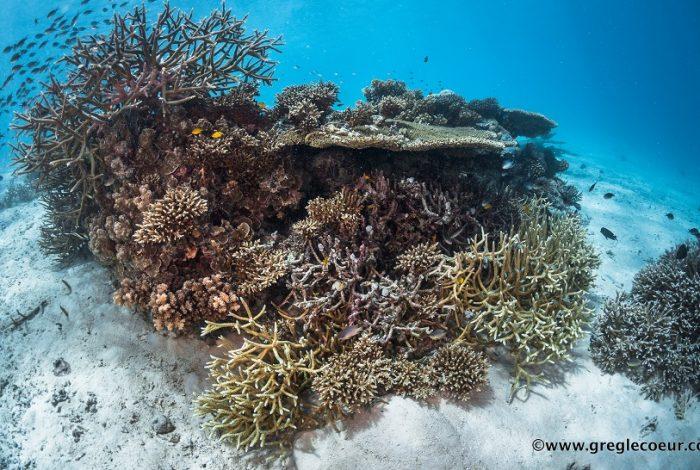 Récif corallien en parfaite santé à Palau © Greg Lecoeur