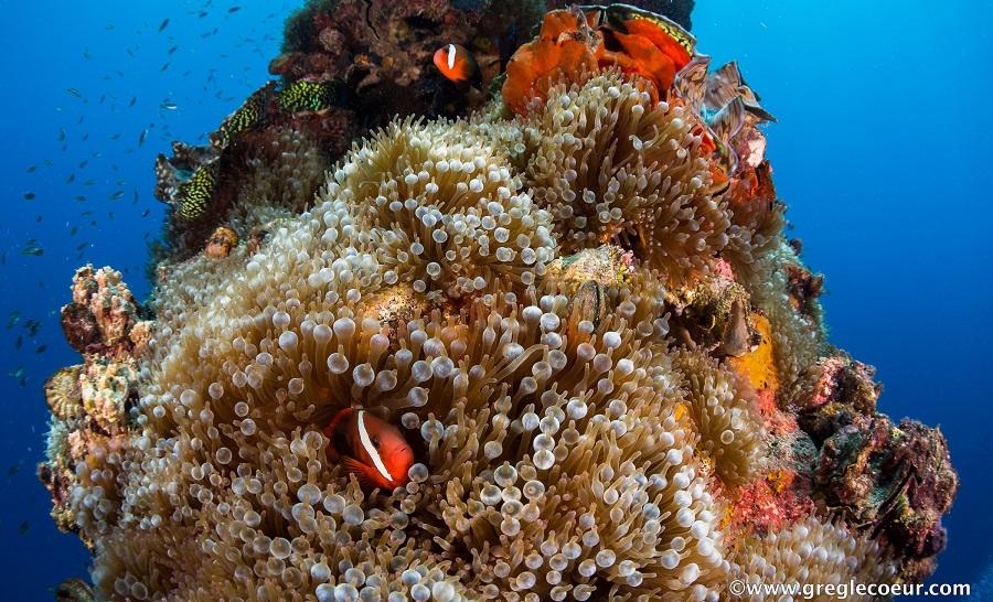 Sur les récifs des Rock Islands, la faune est abondante © Greg Lecoeur