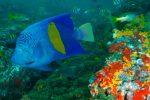 Grand Jeu des Abonnés : abonnez-vous à Plongez !, et gagnez un séjour à Oman avec C6Bo