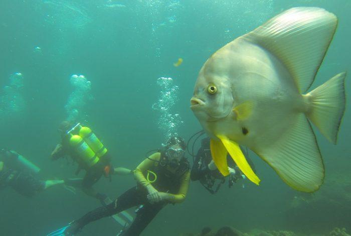 Faune sous-marine du Musandam ©DR