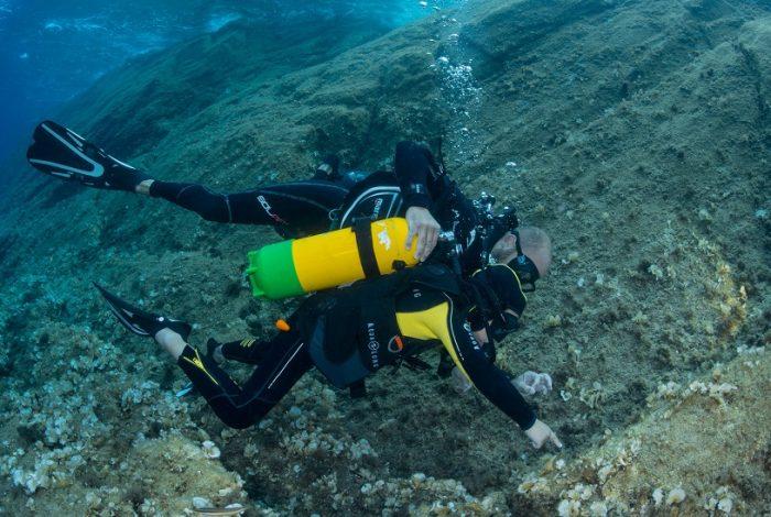 Daurade, poulpe ou barracudas, Apollo a l'œil sous l'eau pour dénicher toutes ses petites bêtes préférées. ©Dominique Barray