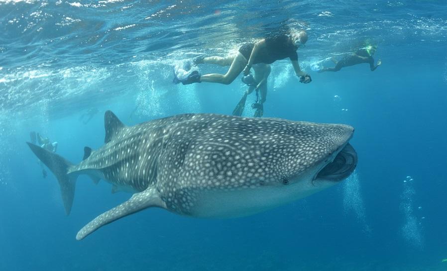 En plongée mais également en PMT, les Seychelles promettent de belles rencontres. ©Nicolas Barraqué
