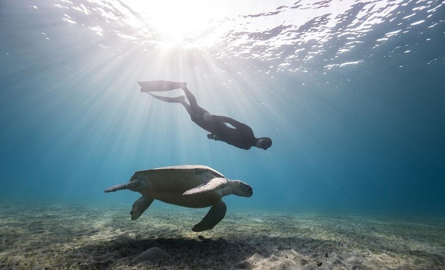L'apnéiste Wendy Timmermans aux côté d'une tortue lors d'une étape de leur tour du monde. ©W.Timmermans et G. Bihet