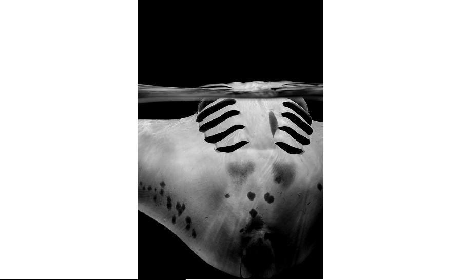 Deuxième noir et blanc © Sylvie Ayer-UPY2018