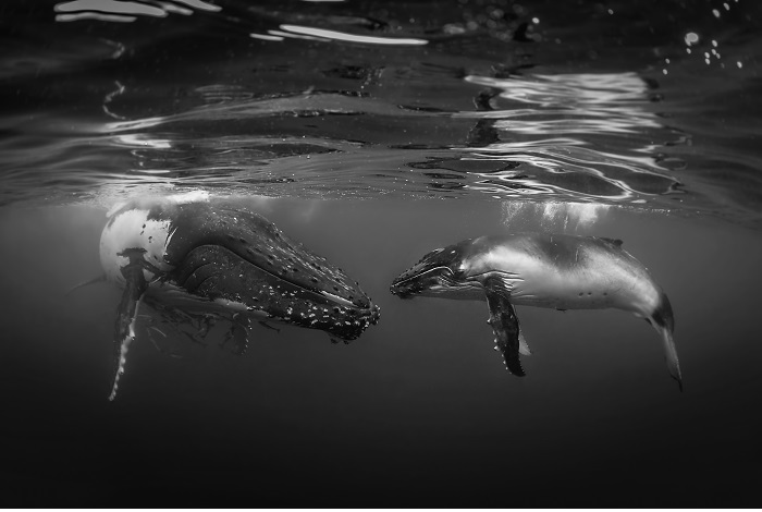 Sixième noir et blanc © Rodney Bursiel-UPY2018