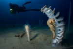 Underwater photographer of the year 2018 : un palmarès exceptionnel
