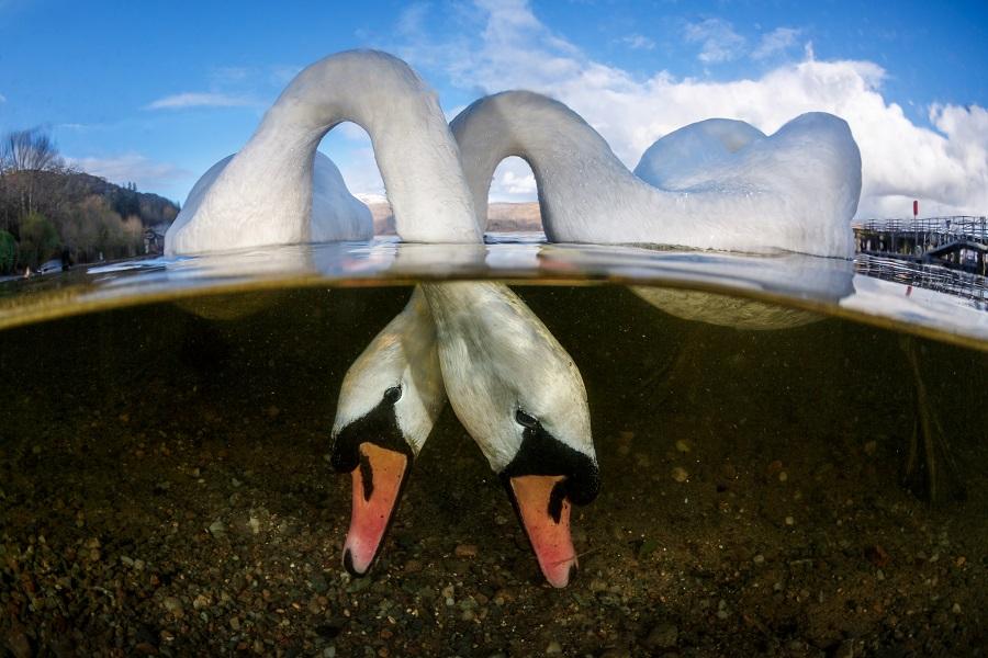 Premier grand angle - eaux britanniques © Grant Thomas-UPY2018