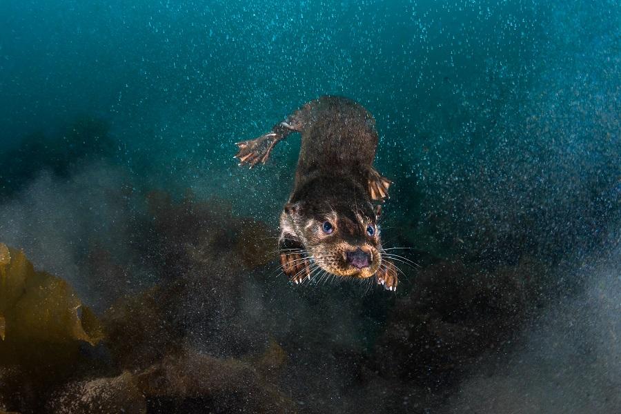 Troisième grand angle - eaux britanniques © Greg Lecoeur-UPY2018