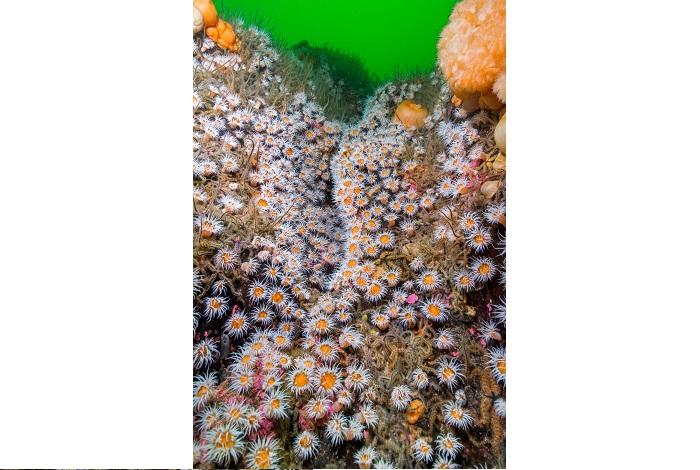 Septième grand angle - eaux britanniques © Paul Kay-UPY2018