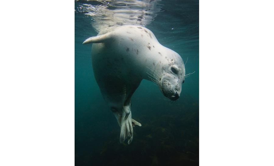 Premier appareil photo compact - eaux britanniques © Vicky Paynter-UPY2018
