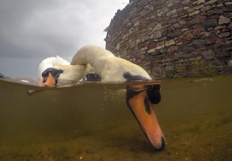 Deuxième appareil photo compact - eaux britanniques © Ian Wade-UPY2018