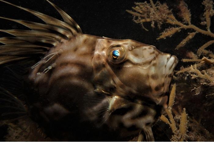 Septième appareil photo compact _ eaux britanniques © Guy Mitchell-UPY2018