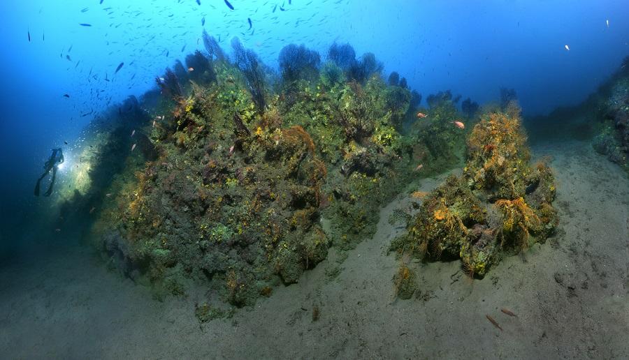 Paysage de coralligène en Méditerranée. © Laurent Ballesta