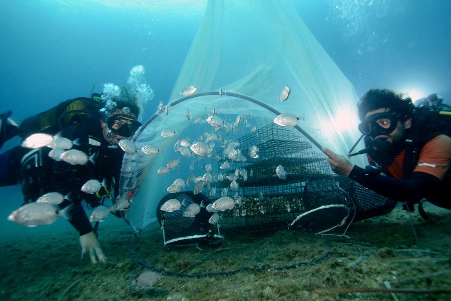 Un groupe de juvéniles relâché à Marseille après avoir grandi au sein des structures d'Ecocean. © Remy Dubas