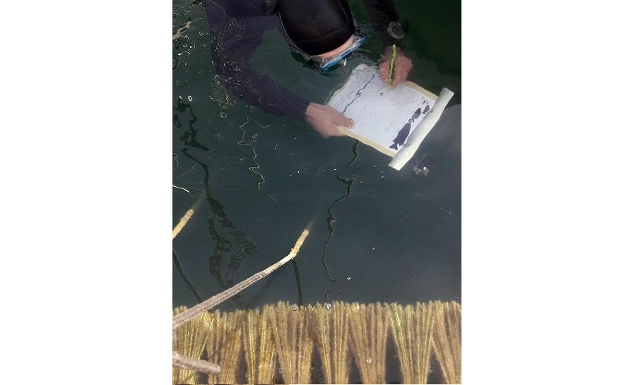 L'évolution des nurseries artificielles du projet ReFISH est étudiée de près par les plongeurs du GIS Posidonie. ©DR