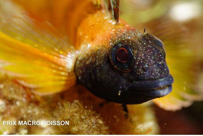 2ème Béatrice Landreau - prix macro poisson